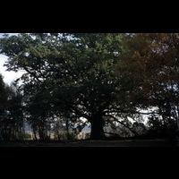 Blm_Nyb 1214.jpg